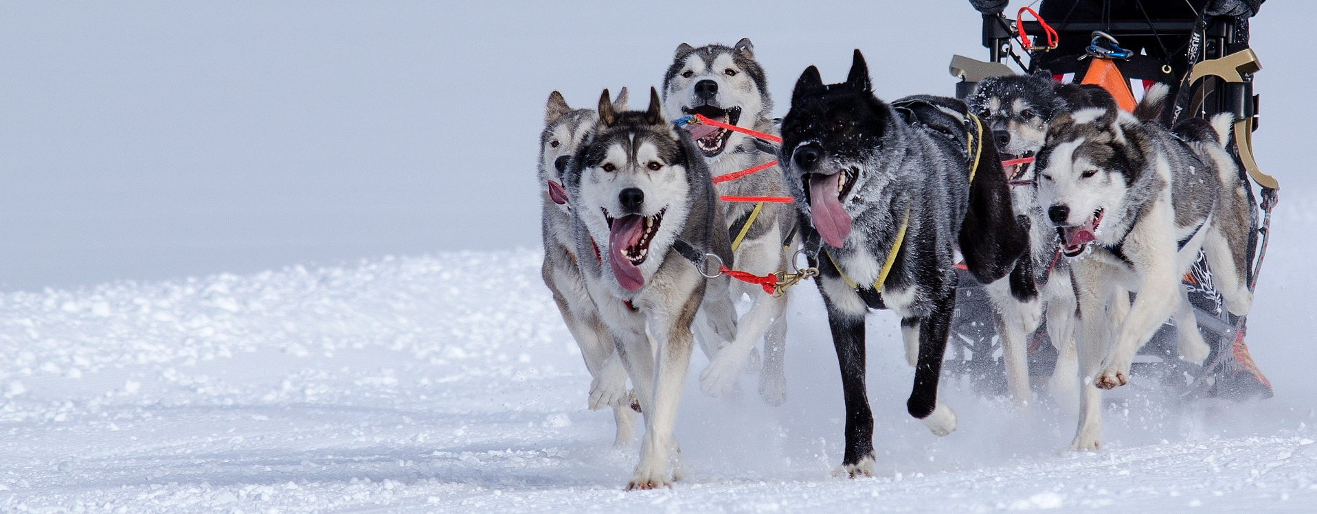 dog-sledding-team-building